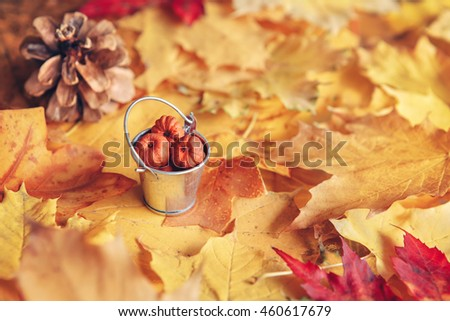 Beautiful close up image shot with colorful yellow red dry autumn fall maple leaves, bucket with pumpkin pods and pine cone, fall season, card wallpaper, textured background, copyspace