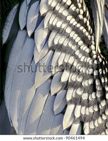 Beautiful close up of the feathers of an Anhinga, or snakebird, water fowl - stock photo