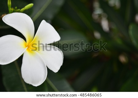 beautiful close up white flower background and spring