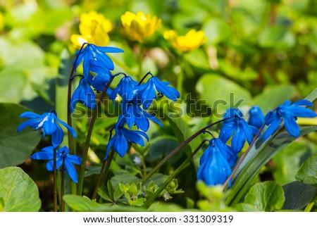 beautiful closeup blue flowers - stock photo