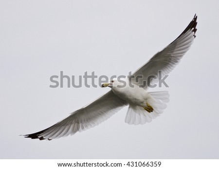 Beautiful closeup of a gull flying in the sky
