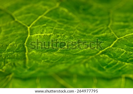 beautiful closeup plant texture background - stock photo