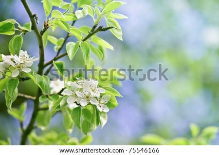 beautiful closeup spring blossoming tree - stock photo