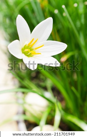 beautiful closeup White Flowers with green leaf background  - stock photo