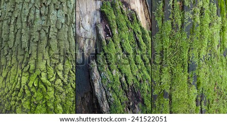 Beautiful closeups of moss in the forest - stock photo