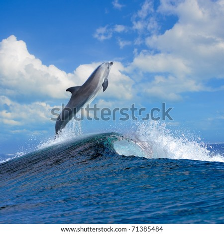 beautiful cloudy seascape in daylight and dolphin jumping out from blue curly breaking surfing wave - stock photo