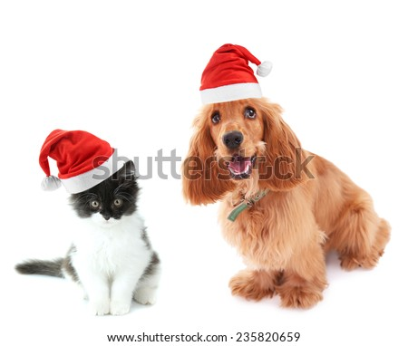 Beautiful cocker spaniel and cute kitten with Santa Hat isolated on white - stock photo