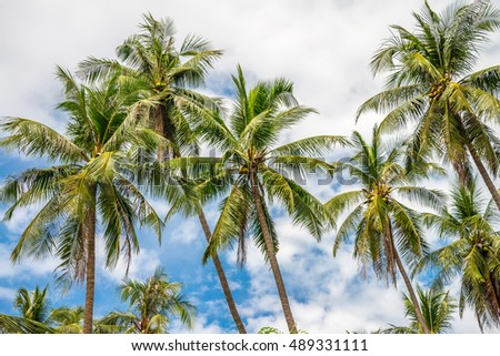 Beautiful coconut palm trees farm in Koh Mak island Thailand