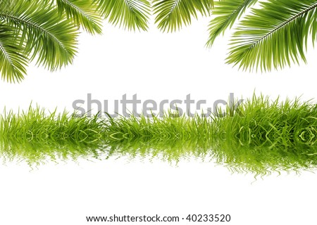 Beautiful coconut tree leaves and grass reflect on white background - stock photo