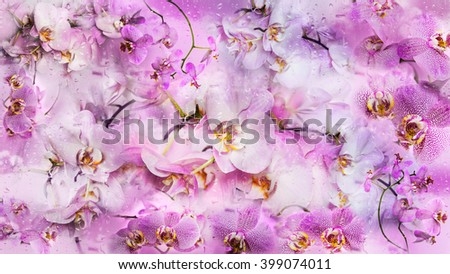 Beautiful collage background of orchid flowers and drops of water. Phalaenopsis orchid flower is like a tropical butterfly. - stock photo