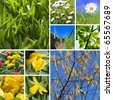 Beautiful collage of spring pictures - stock photo