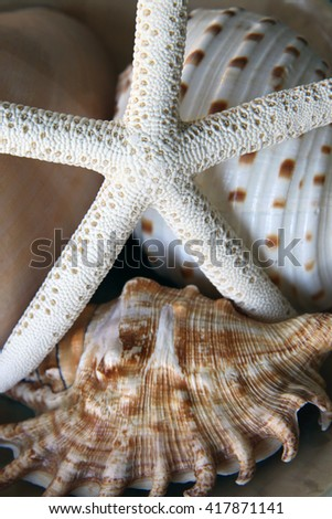 Beautiful collection of shells including starfish - stock photo