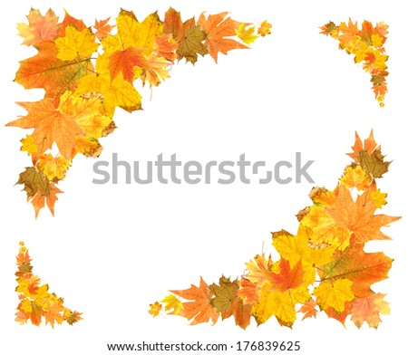 Beautiful colored autumn leaves isolated on white - stock photo