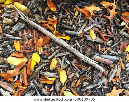 Beautiful colorful and vibrant dry fall leaves on wooded ground