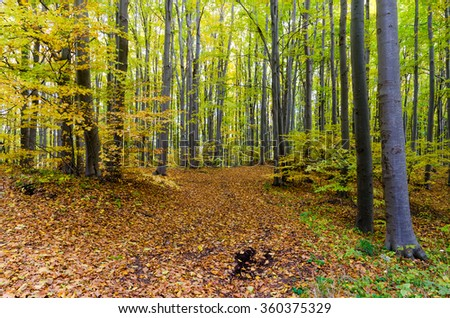 Beautiful Colorful Autumn forest - stock photo