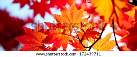 Beautiful Colorful Autumn Leaves - stock photo
