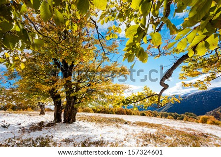 Beautiful colorful autumn leaves in the forest. Carpathian, Ukraine, Europe. Beauty world. - stock photo