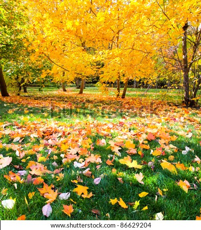 beautiful colorful autumn park in sunny day - stock photo