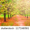 beautiful colorful autumn park in sunny day, perspective vanishing alley - stock photo