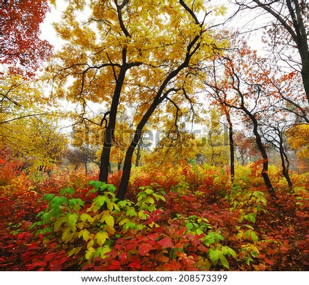 beautiful colorful autumn trees and foliage in the park