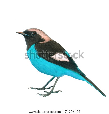 Beautiful colorful bird on white background