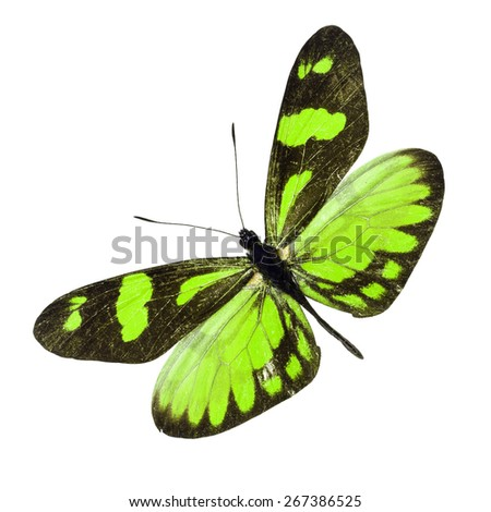 Beautiful Colorful Butterfly isolated on white background