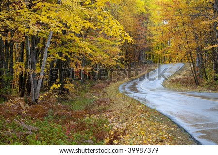Beautiful colorful fall autumn tree leaf lined road