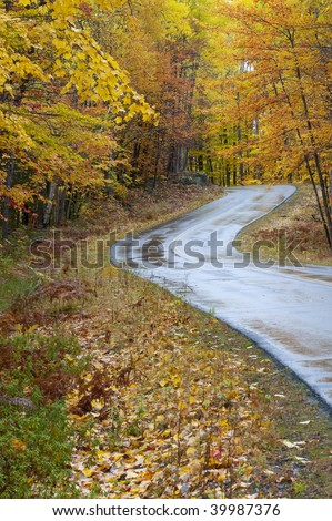 Beautiful colorful fall autumn tree leaf lined road vertical