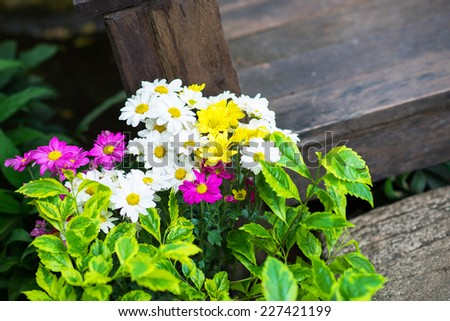 Beautiful colorful flower - stock photo