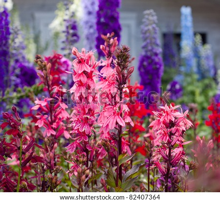 beautiful colorful flowers - stock photo