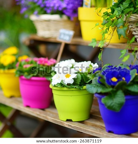 Beautiful colorful flowers sold on outdoor flower shop in Paris, France