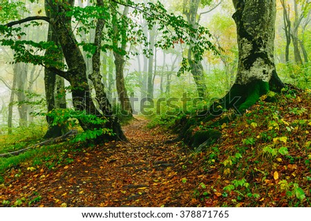 Beautiful colorful forest scene with path in the Croatian Plitvice National Park  - stock photo
