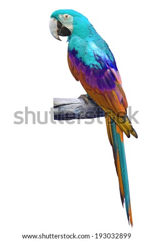 beautiful colorful macaw isolated on white background