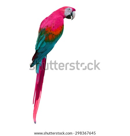 Beautiful colorful macaw isolated on white background - stock photo