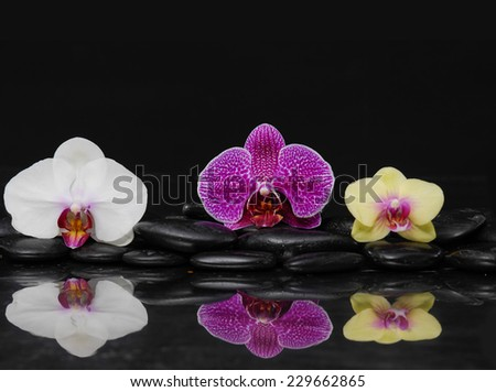beautiful colorful orchid on black pebbles-black background - stock photo