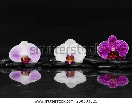 beautiful colorful orchid on black pebbles reflection, -black background - stock photo