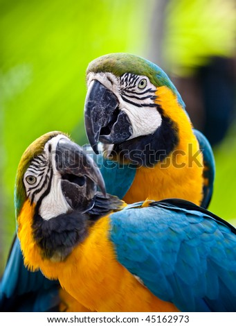 Beautiful colorful parrot - stock photo