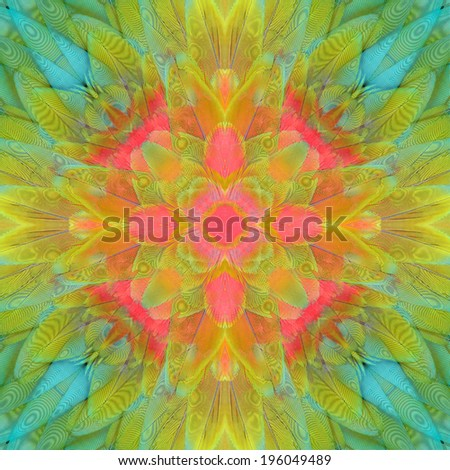 Beautiful colorful pattern background texture made from butterfly's wing. - stock photo