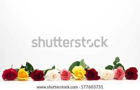 Beautiful colorful  roses isolated on white - stock photo