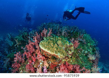 Beautiful colorful soft coral and diver underwater - stock photo