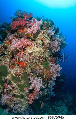 Beautiful colorful soft coral underwater - stock photo