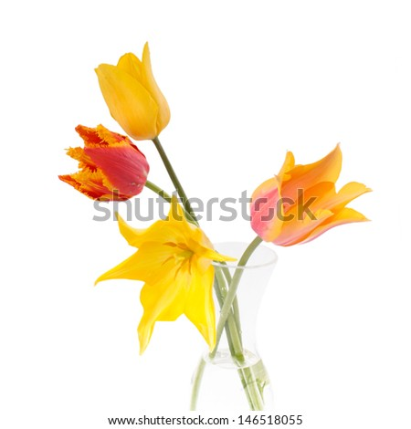 Beautiful colorful tulips in the glass vase