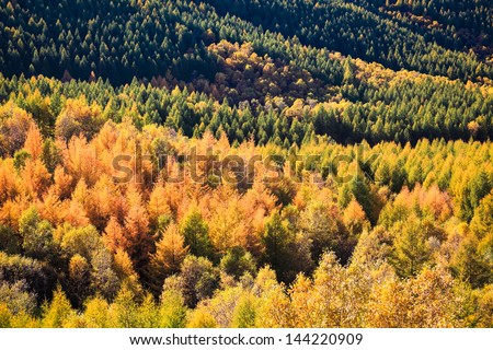 beautiful colors in autumn of the forest - stock photo