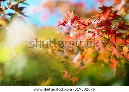 Beautiful colors of autumn. Colorful spectrum of bright autumn colors, Red, orange, yellow, green leaves on a autumn trees. Shallow depth of field. - stock photo