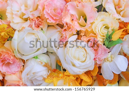 beautiful colors of flowers  - stock photo