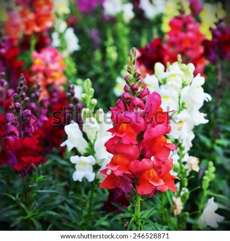 Beautiful Colourful Flowerbed Background - stock photo
