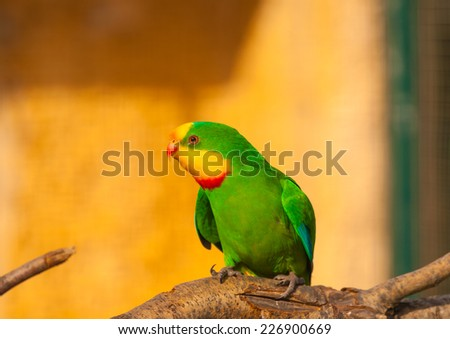 beautiful colourful parrot (agapornis) or (love bird) sitting on his branch - stock photo