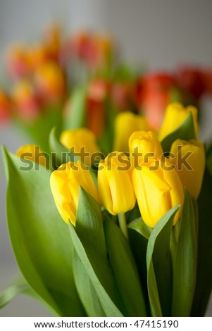 Beautiful colourful tulips for easter