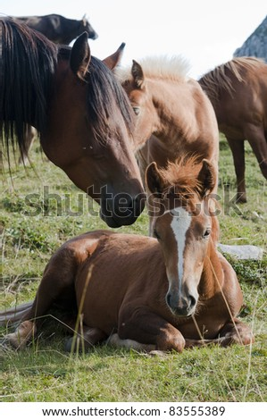 beautiful colt relaxing