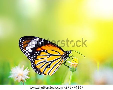 Beautiful Common Tiger butterfly on flower in the outdoor nature